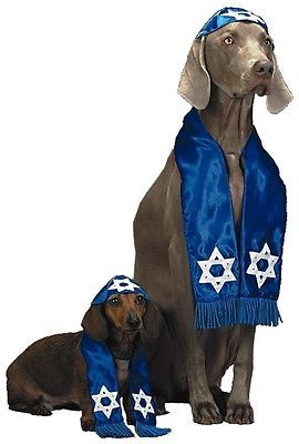 Kosher dogs